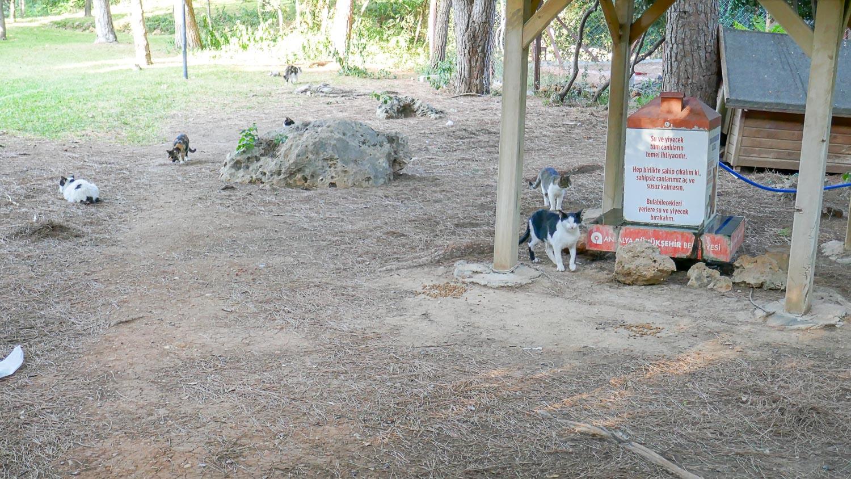 Парк с котиками