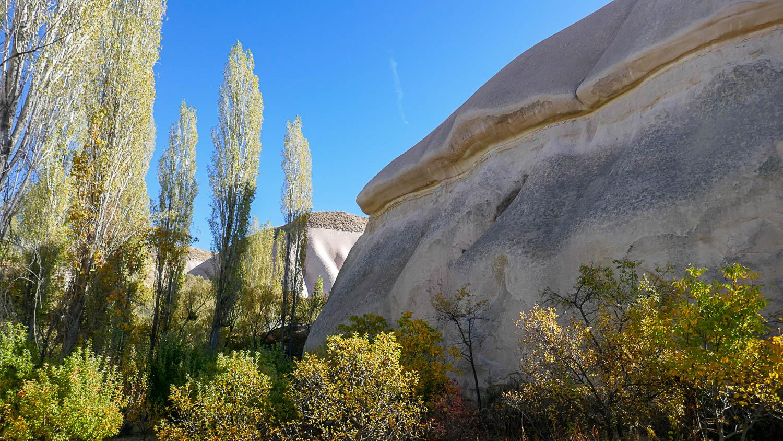 Растительность на фоне камней
