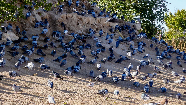 Птицы-птицы-птицы