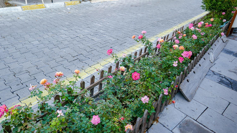 Розы цветут