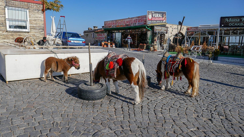 Лошадки у входа
