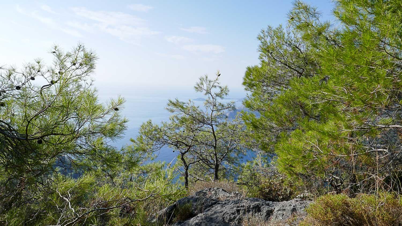 Море за деревьями