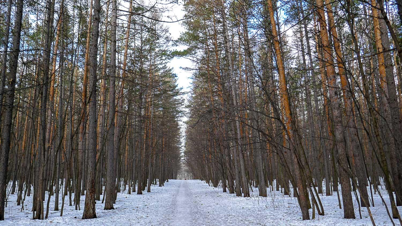 Почти зимний лес