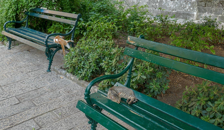 Кошки - хозяева парка